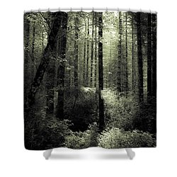 Shower Curtain featuring the photograph The Woods by Katie Wing Vigil