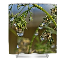 The World In A Drop Of Water Shower Curtain by Peggy Hughes