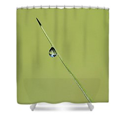 Shower Curtain featuring the photograph The World Within A Dewdrop by Penny Meyers