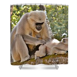 There Is Nothing Like A  Backscratch - Monkeys Rishikesh India Shower Curtain