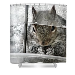 Thief In The Birdfeeder Shower Curtain