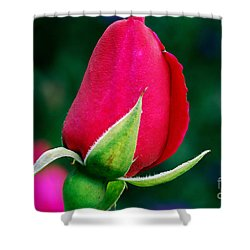 Things To Come Shower Curtain by Wendy Wilton