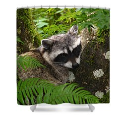 This Is A Nice Spot To Sleep Shower Curtain by Kym Backland