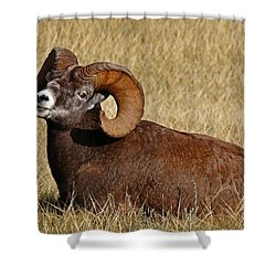 Shower Curtain featuring the photograph This Is My Space by Vivian Christopher