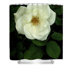 This Rose For You Shower Curtain