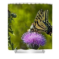 Shower Curtain featuring the photograph Thistle Do Just Fine by Gary Holmes