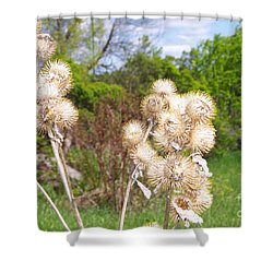 Thistle Me This Shower Curtain by Mary Mikawoz