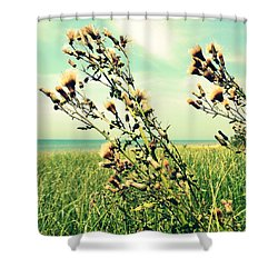 Thistle On The Beach  Shower Curtain by Michelle Calkins