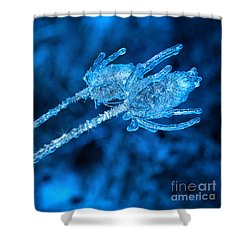 Thistle Plant On Icy Night Shower Curtain