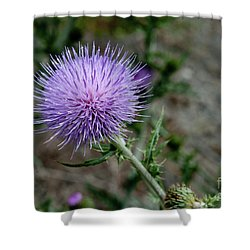 Shower Curtain featuring the photograph Thistle by Rod Wiens