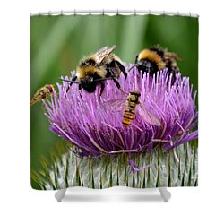 Thistle Wars Shower Curtain