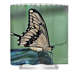 Thoas Swallowtail Butterfly Shower Curtain by Heiko Koehrer-Wagner