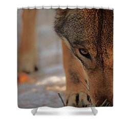 Those Eyes Shower Curtain by Karol Livote