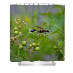 Shower Curtain featuring the photograph Thread-waist Wasp by James Petersen