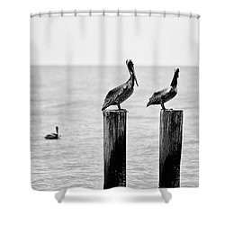 Three Amigos Shower Curtain by Scott Pellegrin