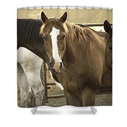 Shower Curtain featuring the photograph Three Amigos by Steven Bateson