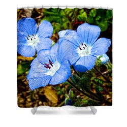 Three Baby Blue Eyes In Park Sierra-ca Shower Curtain by Ruth Hager