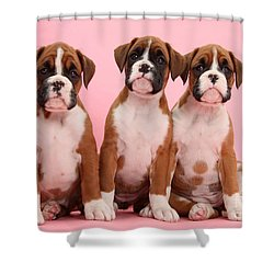 Three Boxer Puppies Shower Curtain by Mark Taylor