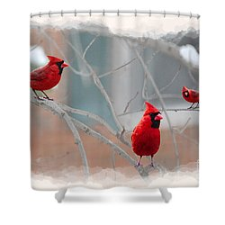 Three Cardinals In A Tree Shower Curtain