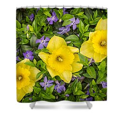 Three Daffodils In Blooming Periwinkle Shower Curtain by Adam Romanowicz