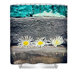 Shower Curtain featuring the photograph Three Daisies Stuck In A Door by Silvia Ganora