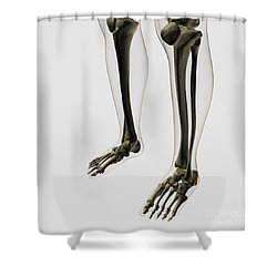 Three Dimensional View Of Human Leg Shower Curtain by Stocktrek Images