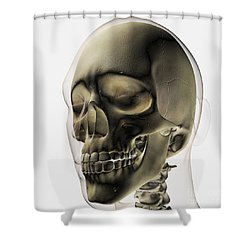 Three Dimensional View Of Human Skull Shower Curtain by Stocktrek Images