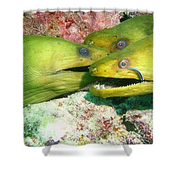Three Eels Shower Curtain by Carey Chen