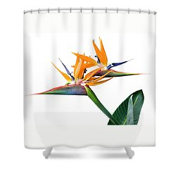Three Heads Are Better Than One Shower Curtain by Denise Bird