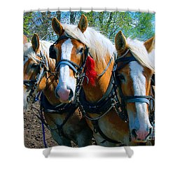 Shower Curtain featuring the photograph Three Horses Break Time  by Tom Jelen