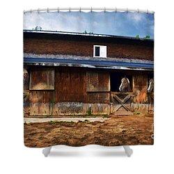 Three Horses In A Barn Shower Curtain by Dan Friend