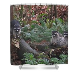 Three Is A Crowd Shower Curtain by Kym Backland