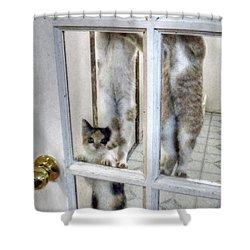 Three Kitten Door Deco Shower Curtain by Aliceann Carlton