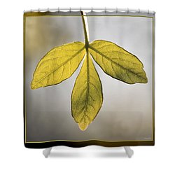 Shower Curtain featuring the photograph Three Leaves by Jaki Miller