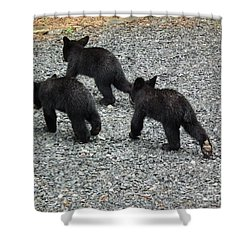 Shower Curtain featuring the photograph Three Little Bears In Step by Jan Dappen