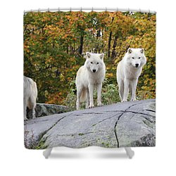 Three Looking At Me Shower Curtain