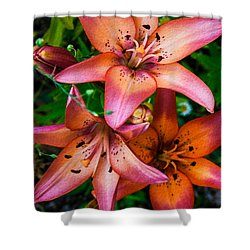 Three Pink Lilies Shower Curtain by Omaste Witkowski