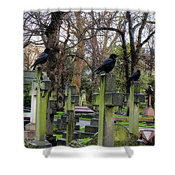 Three Ravens Shower Curtain
