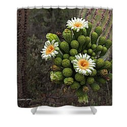 Three Saguaro Blossoms And Many Buds Shower Curtain by Tom Janca