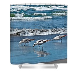 Shower Curtain featuring the photograph Three Seagulls At Ocean Shore Art Prints by Valerie Garner