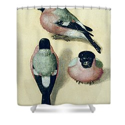 Three Studies Of A Bullfinch Shower Curtain by Albrecht Durer