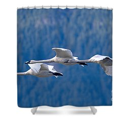 Three Swans Flying Shower Curtain