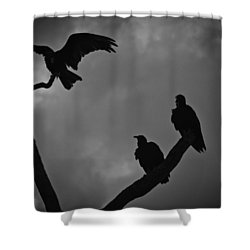 Three Vultures Shower Curtain by Bradley R Youngberg