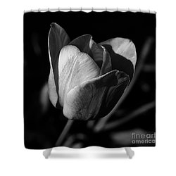 Threshold - Monochrome Shower Curtain