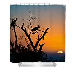 Three Vultures Waiting Shower Curtain