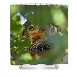 Through The Althea Shower Curtain by Allen Sheffield