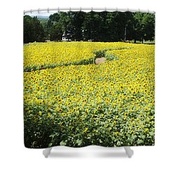 Through The Sunflowers Shower Curtain by Michelle Welles