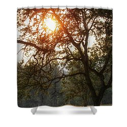 Through The Trees Shower Curtain by Melanie Lankford Photography