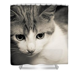 Tibbet 5 Shower Curtain by Nick Kirby