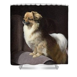 Tibetan Spaniel Painting Shower Curtain